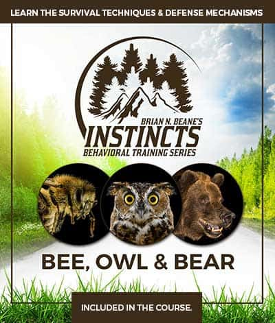 Instincts Series: Bee, Owl, and Bear