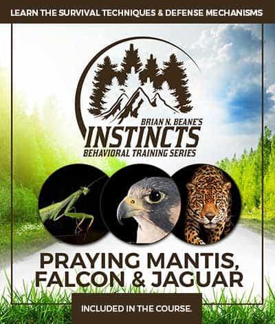 Instincts Series: Praying Mantis, Falcon & Jaguar