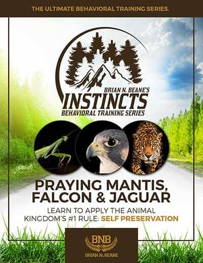 Instincts Series: Praying Mantis, Falcon & Jaguar